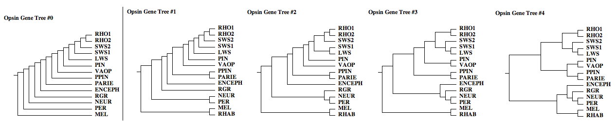 Opsin gene trees.png